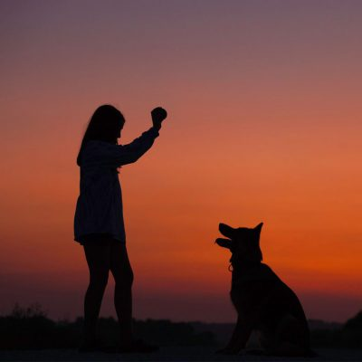 one to one dog training in Newton abbot