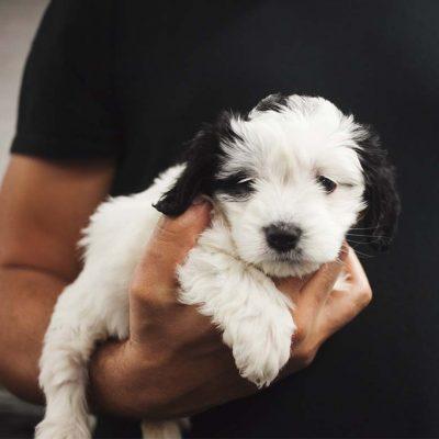 puppy package in Newton abbot