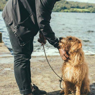 Dog training walks in Newton abbot